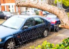 Spinneweb in de herfst met waterdalingen Royalty-vrije Stock Afbeelding