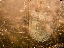 Spinneweb in de ochtend Stock Foto