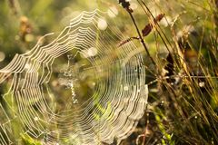 Spinneweb in de ochtend stock fotografie