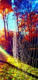 Spinneweb in de vroege ochtend Royalty-vrije Stock Foto's