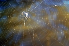 Spinneweb die en op prooi wordt gecreeerd wachten die Stock Fotografie