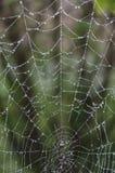 Spinneweb door ochtenddauw die nat wordt gemaakt Stock Afbeeldingen