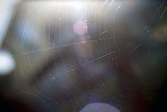 Spinneweb in een boom Royalty-vrije Stock Afbeelding