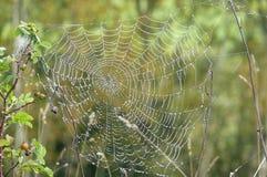 Spinneweb en dauw Royalty-vrije Stock Afbeelding