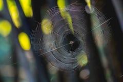 Spinneweb en spinnen Stock Foto