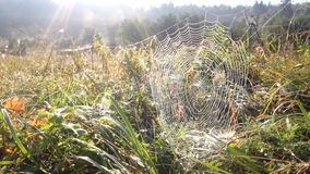 Spinneweb en zon stock video