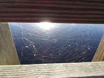 spinneweb in everglades op een houten dok royalty-vrije stock afbeeldingen