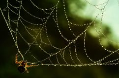 Spinneweb groene dalingen Royalty-vrije Stock Afbeeldingen