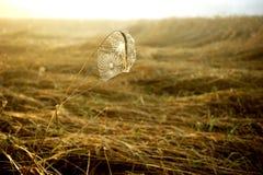 Spinneweb in het licht van de het toenemen zon. Royalty-vrije Stock Afbeeldingen