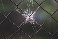 Spinneweb in het ochtendlicht Stock Foto