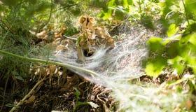 Spinneweb in het park in de aard Royalty-vrije Stock Afbeeldingen