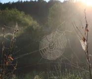Spinneweb in het zonlicht Stock Foto's