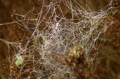 Spinneweb met dauw Royalty-vrije Stock Afbeeldingen