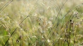 Spinneweb met dauw stock video