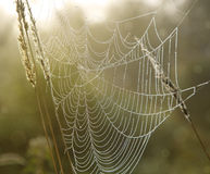 Spinneweb met dauwdalingen Royalty-vrije Stock Afbeeldingen