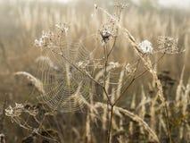 Spinneweb met dauwdalingen in ochtendmist bij dageraad op vage achtergrondclose-upmening Stock Foto's