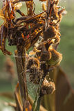 Spinneweb met dauwdruppeltjes daarin worden gevangen die Royalty-vrije Stock Foto's