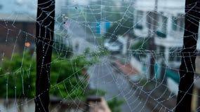 Spinneweb of Spinneweb met de vroege dalingen van de ochtenddauw Stock Foto