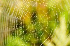 Spinneweb met druppeltjes Stock Foto's