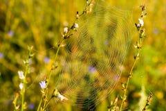 Spinneweb met druppeltjes Royalty-vrije Stock Foto's