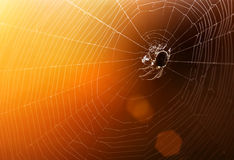 Spinneweb met kleurrijke achtergrond Stock Foto's