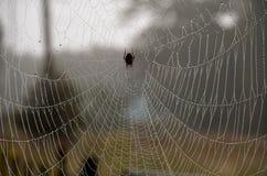 Spinneweb Stock Fotografie