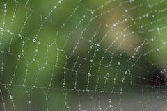 Spinneweb met regendruppels royalty-vrije stock afbeelding