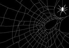 Spinneweb met spin Stock Foto's