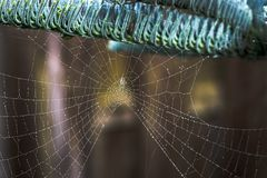 Spinneweb met uiterst kleine druppeltjes royalty-vrije stock foto's