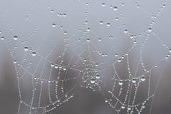 Spinneweb na regen royalty-vrije stock afbeelding