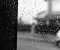 Spinneweb na regen Stock Foto's