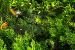 Spinneweb onder groene bladeren royalty-vrije stock afbeeldingen