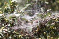 Spinneweb op de aard Royalty-vrije Stock Foto