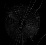 Spinneweb op de donkere achtergrond Stock Afbeeldingen
