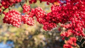 Spinneweb op de Gouden en zilveren houten vruchten Stock Foto's