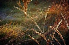 Spinneweb op de herfstgras op een weide in de ochtendzon Stock Foto
