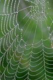 Spinneweb op de regenachtige ochtend Royalty-vrije Stock Foto's