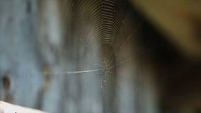 Spinneweb op een zonnige dag stock videobeelden