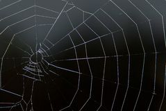 Spinneweb op zwarte Royalty-vrije Stock Fotografie