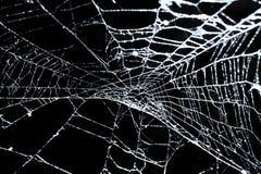 Spinneweb op zwarte Stock Foto's