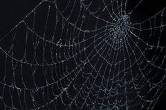 Spinneweb op zwarte Royalty-vrije Stock Foto
