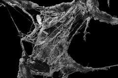 Spinneweb of spinneweb op zwarte achtergrond wordt geïsoleerd die Royalty-vrije Stock Foto