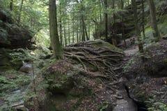 Spinneweb van boomwortels royalty-vrije stock afbeelding