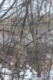 Spinneweb van installaties in de beken van natuurreservaatolenyi in het gebied van Sverdlovsk royalty-vrije stock foto