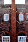 Spinneweb in venster royalty-vrije stock afbeeldingen