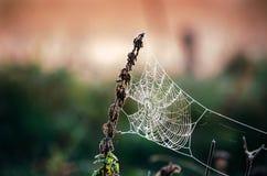Spinneweb in vorst bij ochtend Ijs op het spinneweb Stock Foto's