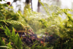 Spinneweb vroeg in de ochtend stock afbeelding