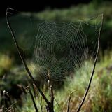 Spinneweb in vroege de druppeltjescondensatie van het ochtend lichte tonende water royalty-vrije stock afbeelding