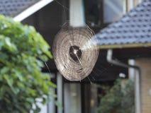 Spinneweb in vroege die ochtend met dauw wordt behandeld royalty-vrije stock fotografie