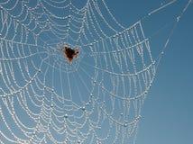 Spinneweb zoals een gevoelige halsband van briljant c Stock Afbeelding